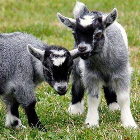 Hall Farm Park: Ahhhh.. arn't they lovely