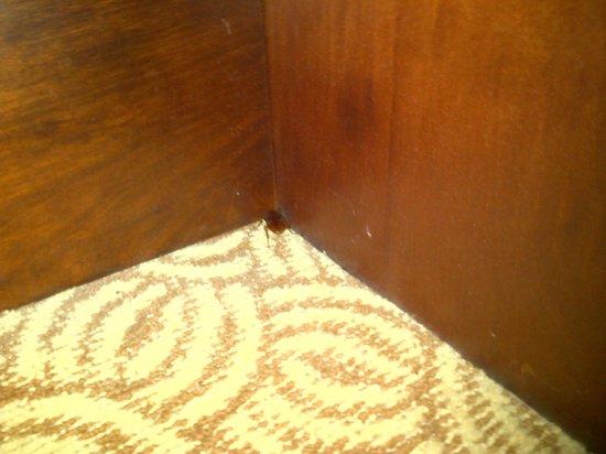 Sheraton Buenos Aires Hotel & Convention Center: cucaracha