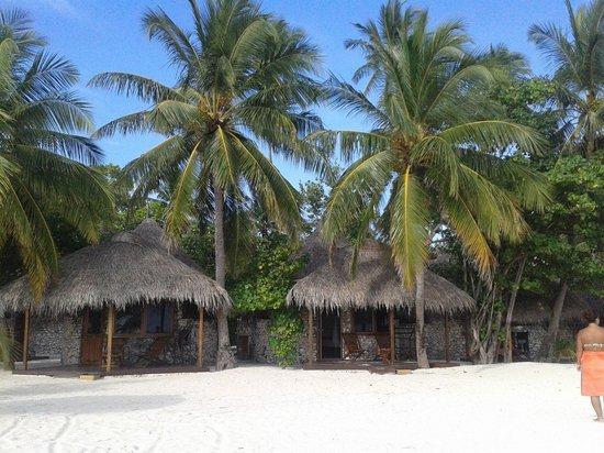 VOI Dhiggiri Resort : palme