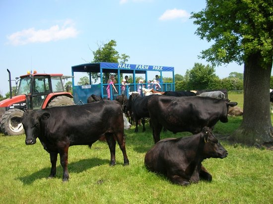 Hall Farm Park: Lets go on the tractor ride..