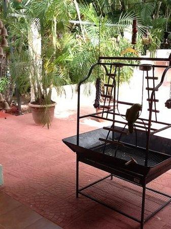 Hotel Bula Bula: bertrude, breakfast companion.