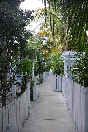 Parrot Key Hotel and Resort: Allée dans la végétation