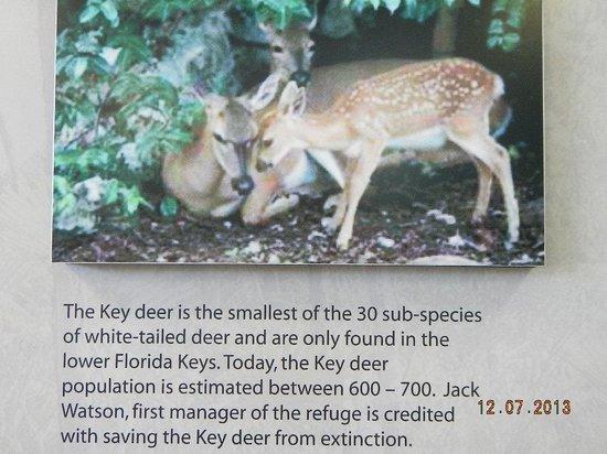 National Key Deer Refuge: deer key information