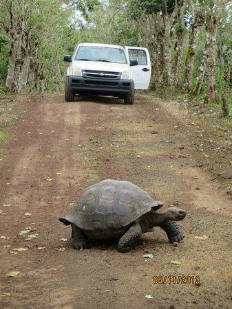 Reserva El Chato: Tortuga cruzando la via