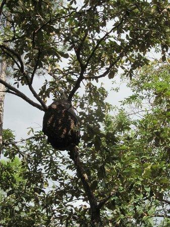 Hidden Valley Inn: Termite hive
