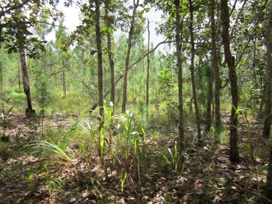 Hidden Valley Inn: Jaguarundi trail