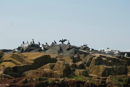 Lulu Lobster Boat: Sea Birds on the Rocks