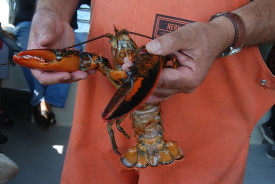 Lulu Lobster Boat: Learning About Lobster