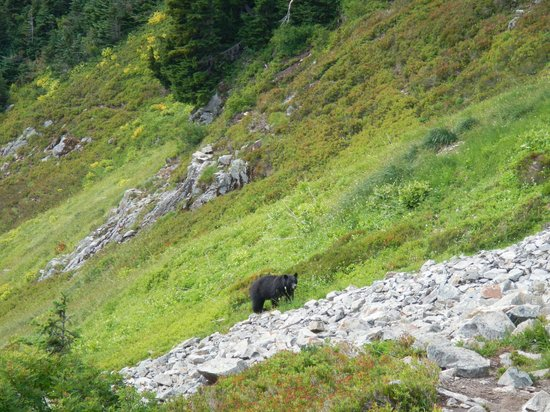 Cascade Pass: More bear along the trail