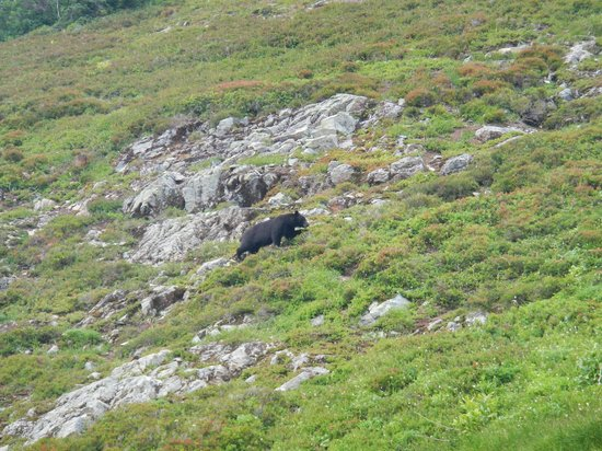 Cascade Pass: Bear along the trail