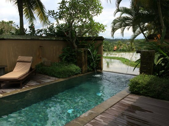 The Chedi Club Tanah Gajah, Ubud, Bali – a GHM hotel : Our private pool overlooking the rice paddies