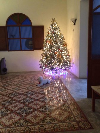 Hotel Merida Santiago : Christmas tree and Gio!