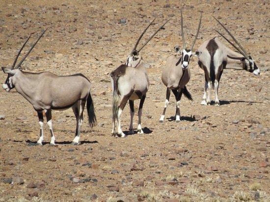 andBeyond Sossusvlei Desert Lodge : Oryx seen from breakfast