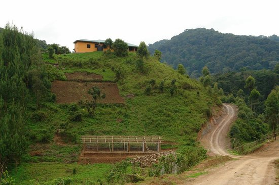Gorilla Valley Lodge: Verblijf ligt boven op de heuvel
