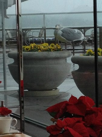Pan Pacific Vancouver: View from the breakfast restaurant, with a hungry seagull peering in