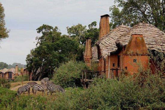 andBeyond Ngorongoro Crater Lodge: Wonderful Architecture & Zebras