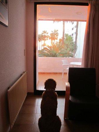 Apartamentos Tamarindos : Viendo el amanecer