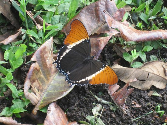 Pasion Costa Rica: Butterfly during tour