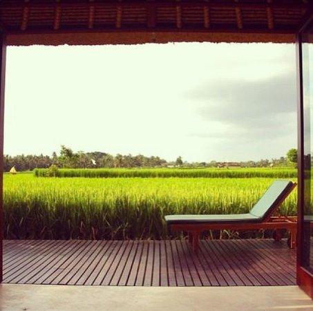Bali Harmony Villas: The view from Villas Asmara. How good is this?!!