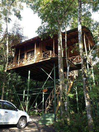 Tree Houses Hotel Costa Rica: Yiguirro Tree House