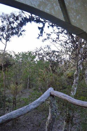 Galapagos Safari Camp: View from the tent