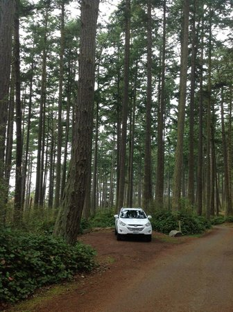 Deception Pass State Park: Another view of the campsite