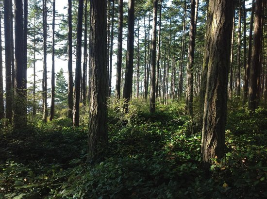 Deception Pass State Park: The view around my campsite
