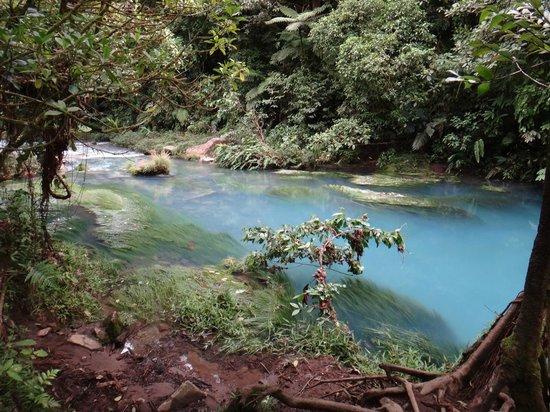 Rio Celeste: Creek Runs Blue