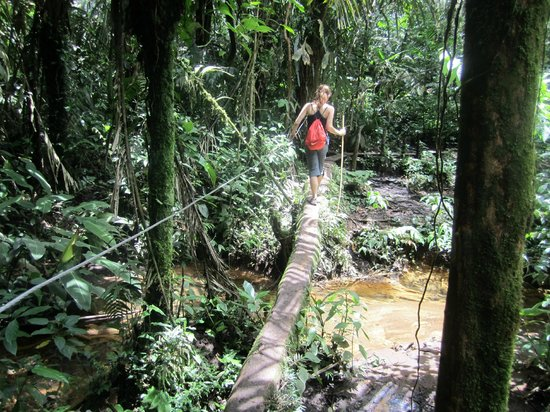 Rio Celeste: Past the waterfall, the path is less developed and you take some log bridges