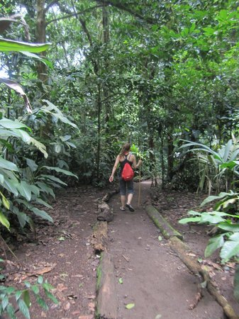 Rio Celeste: Along the hike, well maintained path to the waterfall