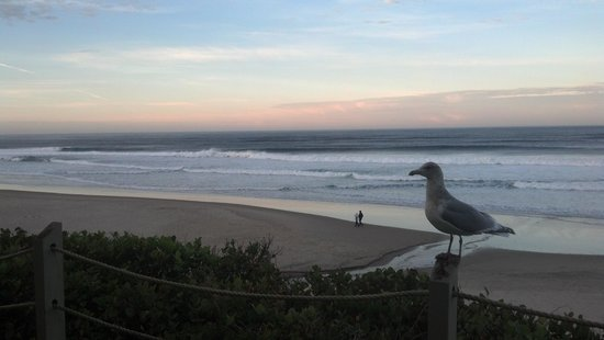 Pelican Shores Inn: Sunrise..with a friend!