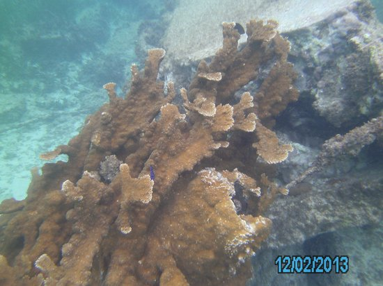 Garrafon de Castilla: Damsel, I think.  Little fish kept playing in and out of the coral.