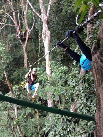 Flight of the Gibbon: 3