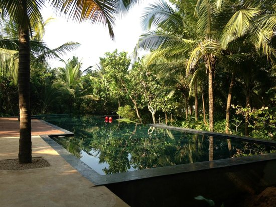 Aashyana Lakhanpal: Teal Infinity pool surrounded by palms