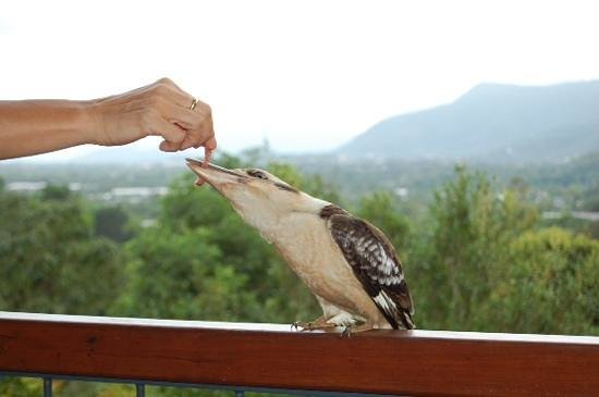 Kookas Bed & Breakfast: The house kookaburra