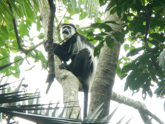 Kibale Forest Camp: Monkeys at the Camp