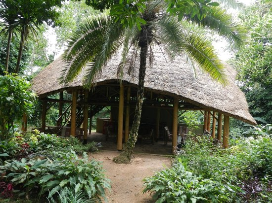 Kibale Forest Camp: Common area for dining and bar