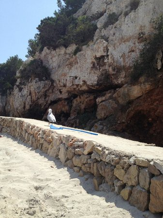Sa Barrera: Песчаный пляж