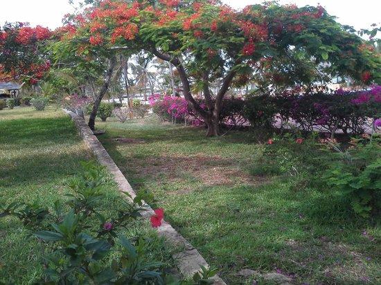 Dongwe Club: vista sul giardino