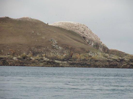 Réserve Naturelle des Sept Îles: Etonnant