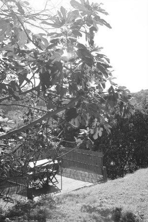 Fattoria Barbialla Nuova: Fig trees
