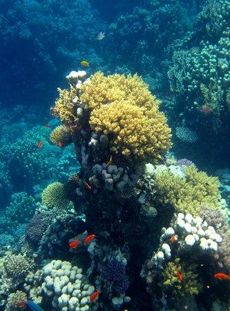 Le Meridien Dahab Resort: Ausflug zum Reef Island