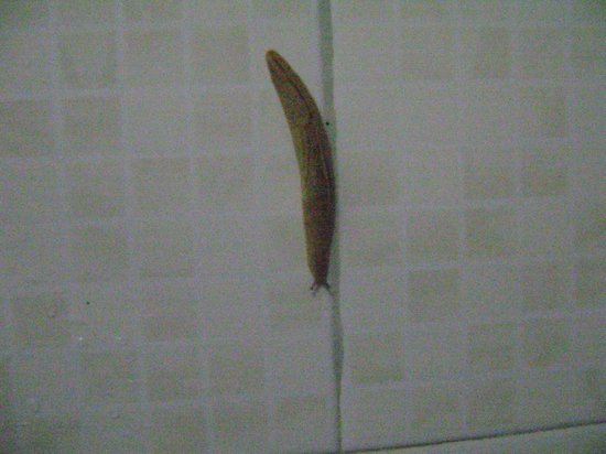 Punarjani Resorts: Snail in the bathroom