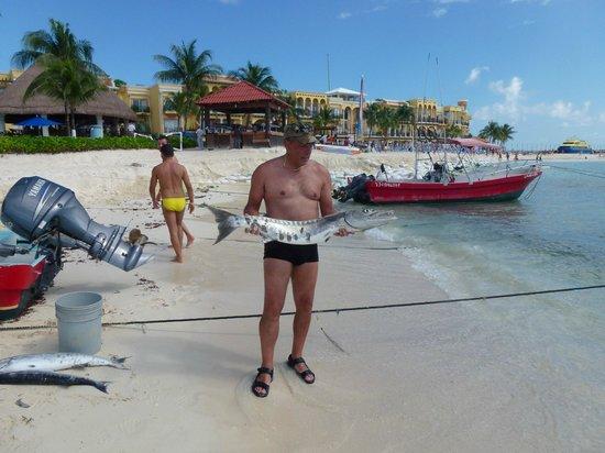 Albertos SCUBA: pesca grossa barracuda