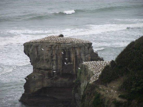 Auckland Fine Wine & Food Tours : Gannet colony above the black sand beach.