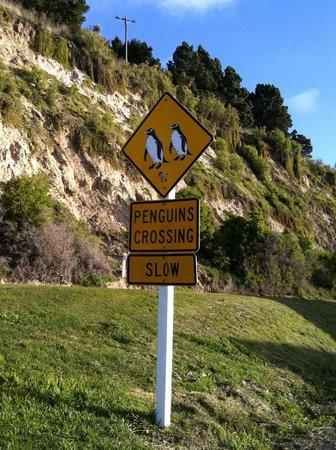 Oamaru Blue Penguin Colony: На подъезде к колонии
