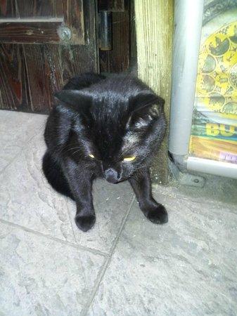 Charles Bridge Economic Hostel: Wifi, the friendly hostel cat