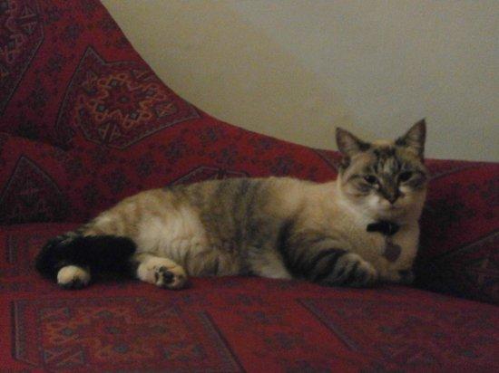 Riad Hadika Maria: Le chat qui squattait gentiment la chambre