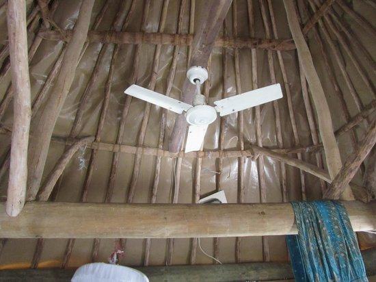 Barefoot Manta Island: Fan