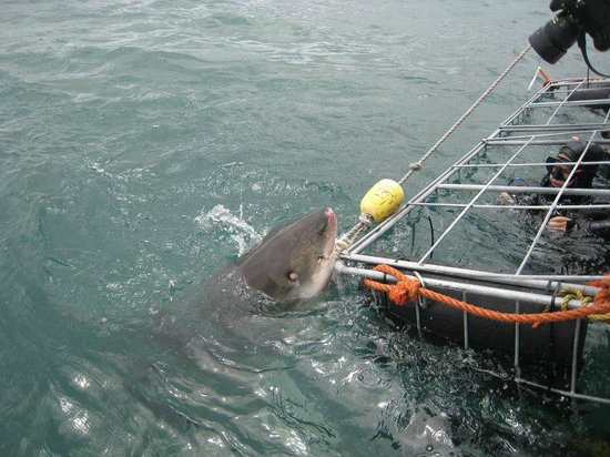 White Shark Projects: Nibble at The Cage
